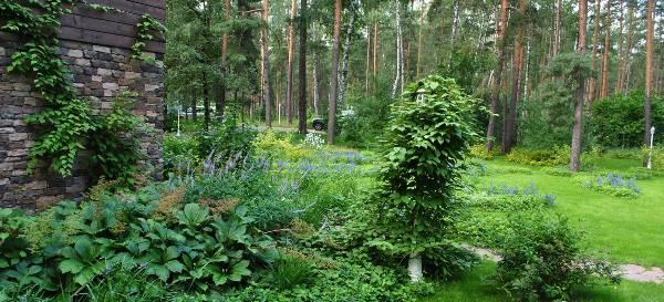 Landscaping-in-Kursk