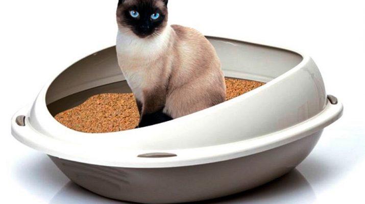 Оригинальные способы организации кошачьего туалета
